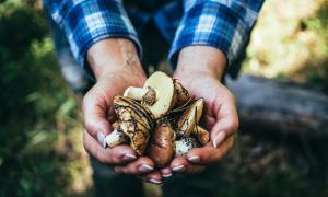 Mushroom papads, jams, cakes to soon hit markets to push production