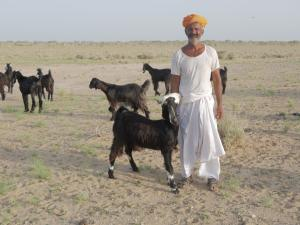 Desertification in India: A livestock keeper says how his stock has plummeted