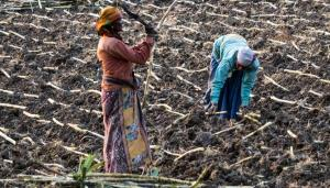 UNCCD COP14: Reclaiming degraded land can help achieve SDGs