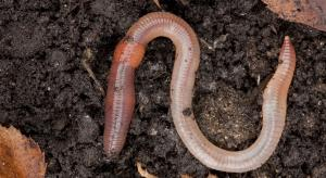 Microplastics in soil threatens earthworms' growth: Study