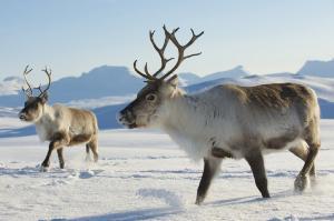 पहाड़ों पर रह रही हैं 85 फीसदी जीव प्रजातियां