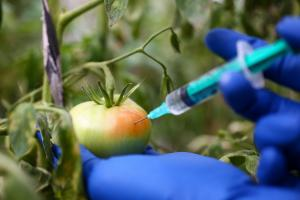 Dangers of artificial ripening of fruits and vegetables