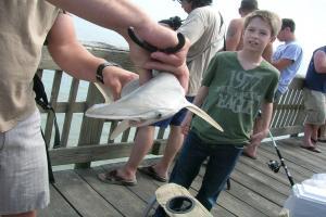 शार्क मछलियों पर भी दिखा जलवायु परिवर्तन का असर: शोध