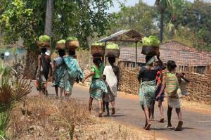 आदिवासियों की नई दिक्कत, नहीं मिल रहा तेंदूपत्ता संग्रहण का पैसा