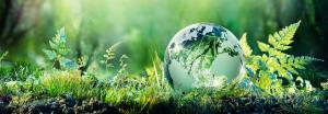 Protecting the environment in times of war