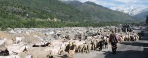 Recognize environmental contribution of pastoralists: Experts