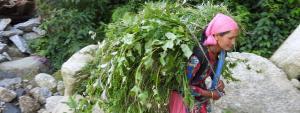 Community-based natural resource management in Himachal still weak