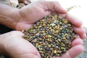 एशिया में हर साल नष्ट हो जाती है किसानों की 20% उपज, इसलिए बढ़ रही हैं कीमतें