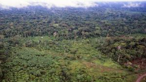 'Amazon region under threat from oil drilling, mining'