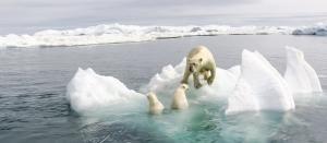 Global Eco Watch: Major ecological happenings of the week (October 22 – 27)