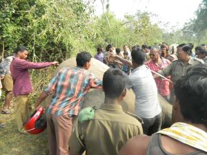 Female elephant dies from electrocution in Odisha