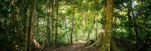 Potential of intact forests in mitigating climate risks undermined: Report