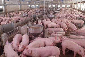 Superbugs found in pork products in Walmart US