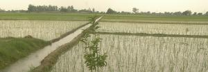 Irrigation does more than deplete groundwater, it changes climate too