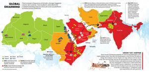 Locust attack: Global swarming