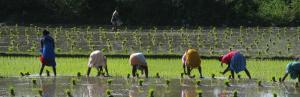 Budget 2020-21: Experts hope for more funds to boost farm income