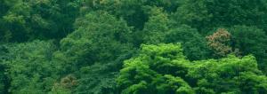 Budget 2020-21: Govt likely to set up a national 'plantation corporation'