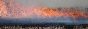 Economic Survey 2019-20: What it says on stubble burning