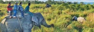 Wildlife recall: Manas National Park's experiment with former poachers