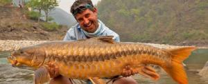 India needs to set a new conservation agenda for mahseer