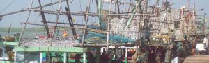 COVID-19: Odisha fishermen feel lockdown heat