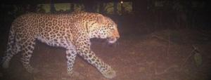 COVID-19 lockdown: Wild animals freely roam Bihar's forests and fields