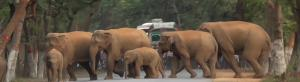 Elephants killed 527 humans in Odisha in 6 years: Wildlife group