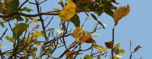 COVID-19 lockdown: Odisha's mahua flower collectors left in lurch