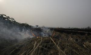 अब खड़ी फसल में आग लगने की घटनाओं ने बढ़ाई किसानों की मुसीबत