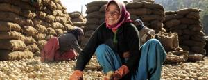 Small farmers, daily wagers take to vegetable retail selling in Himachal due to lockdown