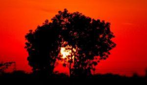 भारत में गर्मी का मौसम शुरू, क्या कम होगा कोरोनावायरस संक्रमण?