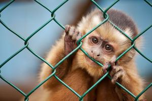 Should we say good-bye to zoos?