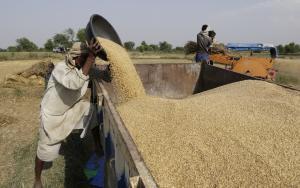 सरकारी आदेश ताक पर, बिहार में नहीं हो रही गेहूं की खरीद