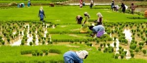 COVID-19 makes Kerala aim for food self-sufficiency