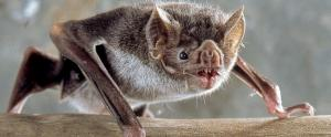 COVID-19: 'It is easy to blame bats than to look at ourselves'