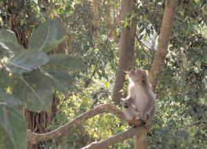 Coming out of the jungle, infectious diseases