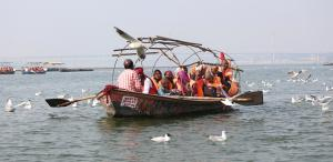 World Migratory Birds Day: Save the gulls of the Sangam