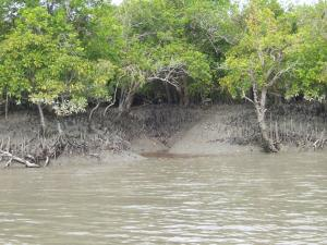 Cyclone Amphan's damage to Sundarbans' wildlife not known yet