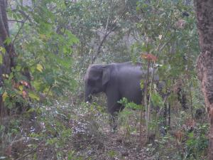 How National Board for Wildlife gives legitimacy to illegal mining in Assam