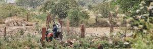 Tracking locust attack: In Rajasthan's Dholpur, pest keeps villagers on toes
