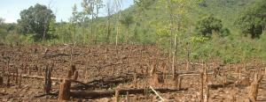 India continues to lose forest land to non-forestry projects