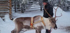 Global Eco Watch: Reindeer may have been domesticated 2,000 years ago