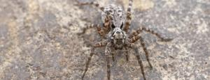 Global Eco Watch: Wolf spiders reproducing more in warming Arctic