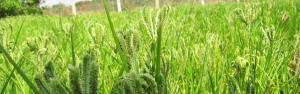 Odisha set to introduce locally produced millets into ICDS, PDS