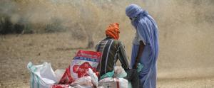 Need food system overhaul to combat global hunger: Report