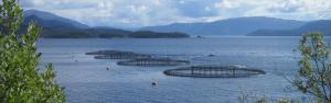 Study predicts 4 outcomes for aquaculture industry amid COVID-19 impact