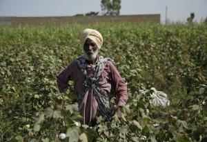 The Green Revolution and a dark Punjab