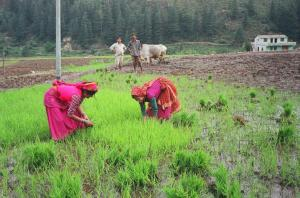 Women farmers emerging as decision-makers, innovators in wheat-based systems: Study