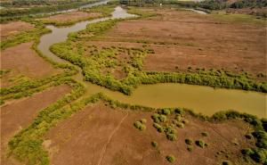 Mangroves and Khazan agriculture: Sustaining Goa's promise for fish, curry and rice