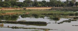 COVID-19: Even skilled workers line up for MGNREGA in Kurukshetra